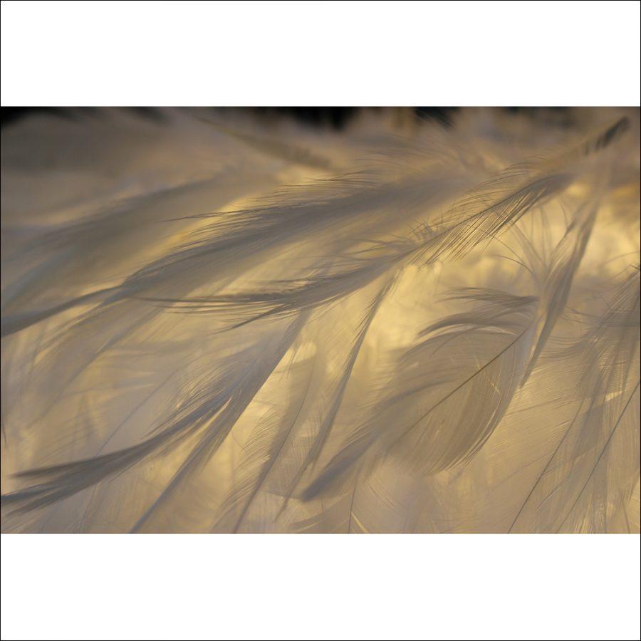 透明感のある羽だからこそできるアイディアあふれる照明です。