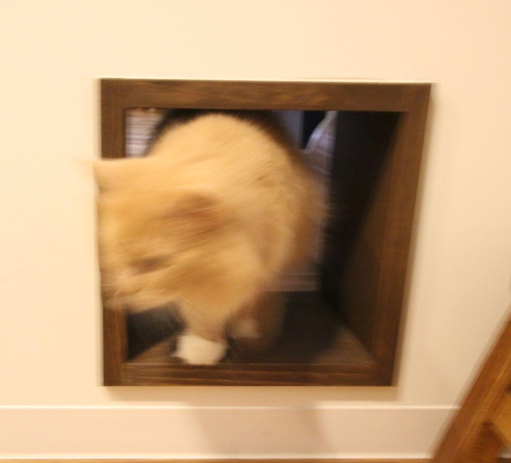 猫の出入り口