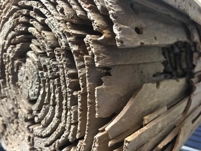 シロアリや腐朽によって構造体がダメに
