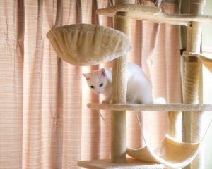 猫とともに暮らすキャットウォークとは
